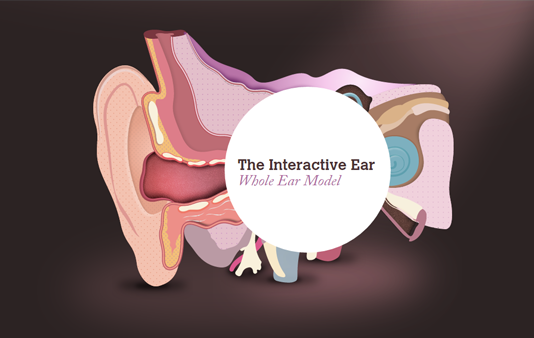 Interactive Ear Tool Showing How The Ear Works By Amplifon