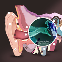Interactive Ear tool showing how the ear works